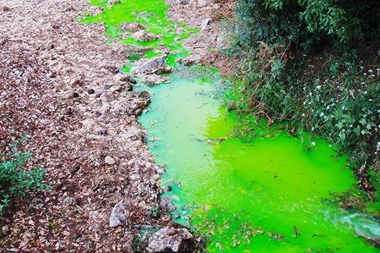 Injection de fluorescéine pour caractériser les pertes dans le Bérange (34) dans le cadre d'une étude de la vulnérabilité de l'aquifère burdigalien
